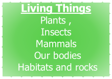 Living Things Plants ,  Insects Mammals  Our bodies  Habitats and rocks